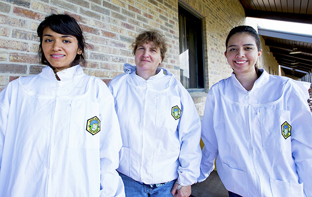 Dr. Julie A. Mustard (at center), assistant professor of biology at UTRGV, is conducting neurological research by studying honey bees, with the help of student researchers Valerie Alvarez (left) and Mariaolga Montes de Oca. Mustard, a neurobiologist, is studying the bees' molecular mechanisms to find out how cells in the brain change during the learning process. (UTRGV Photo by Veronica Gaona)