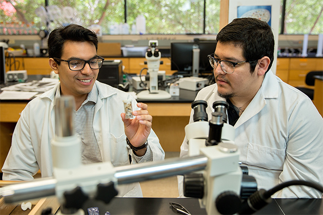 Under the guidance of Dr. Kathryn E. Perez, assistant professor of biology, UTRGV biology students Marco Arturo Martinez Cruz (at left) and Eli Ruiz are involved in research on snails found in Cameron County. Perez and the students recently discovered a new species of snail which they were able to name. (UTRGV Photo by Paul Chouy)