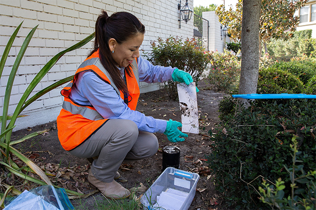 Consuelo Aguilar, a senior biology student at UTRGV, collecting samples of mosquito eggs and larvae in a south McAllen neighborhood. The samples that she collects will be given to the CDC where they will analyze the data and use it to address mosquito-borne illnesses. (UTRGV Photo by Paul Chouy)