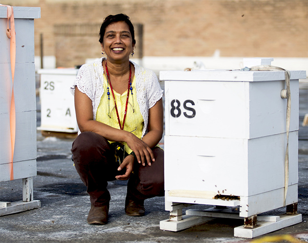 Dr. Joanne Rampersad-Ammons, UTRGV associate professor of chemistry, has been studying apiculture (bee keeping) and issues affecting honey bee health, thanks to a fellowship from the U.S. Department of Agriculture. She is one of five educators nationwide to receive a 2017 USDA E. Kika de la Garza Science Fellowship. The fellowships are presented annually by the USDA's Office of Advocacy and Outreach and Hispanic Serving Institutions National Program. (UTRGV Photo by Silver Salas)