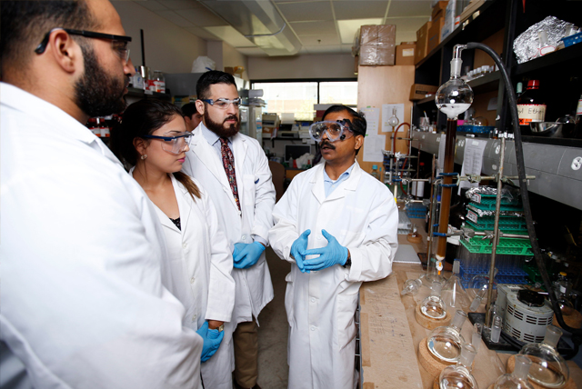 Dr. Debasish Bandyopadhyay (at right), a faculty member in the UTRGV Department of Chemistry in the College of Sciences, discusses with his team of students the research they are conducting on avocado husks. Bandyopadhyay and his students have found chemical compounds in the husks that may be able to help treat certain diseases such as cancer and heart disease. (UTRGV Photo by Paul Chouy)