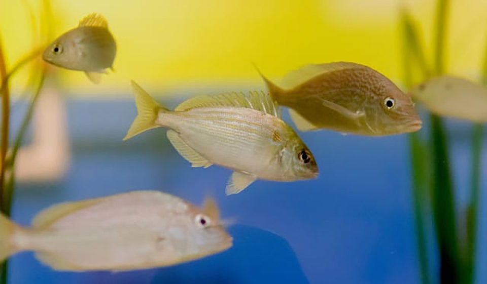the newsroom age of aquariums