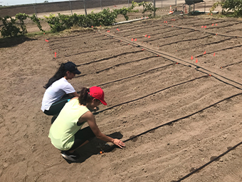 Two soil science students working in a field